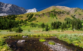 Picture forest, mountains, nature, stones, meadow, Forest key