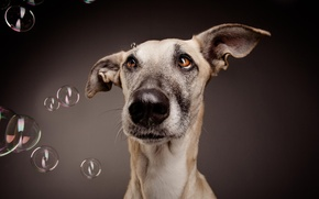 Picture face, bubbles, background, dog