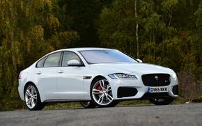 Picture Jaguar, Jaguar, Sedan