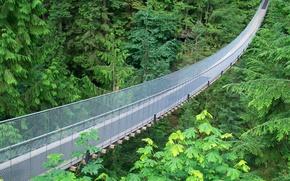 Picture braces, suspension bridge, metal mesh, jungle green