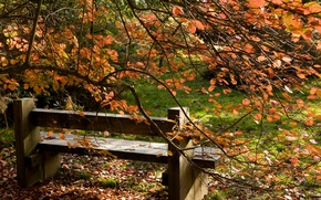 Wallpaper autumn, leaves, trees, landscape, bench, nature, tree