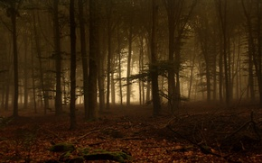 Picture Trees, Forest, Fog, Moss, Branches, Leaves