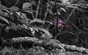 Picture forest, bird, feathers, one, color