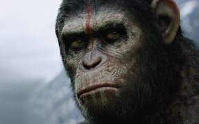 Picture Caesar, Caesar, Planet of the apes: the Revolution, Dawn of the Planet of the Apes