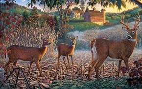 Wallpaper home, Kim Norlien, deer