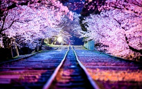 Picture night, the city, lights, spring, Japan, Sakura, April, Kyoto