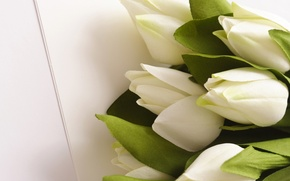Wallpaper leaves, flowers, bouquet, green, tulips, white