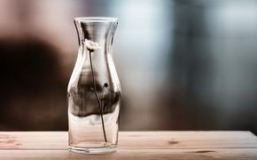 Picture flower, background, vase