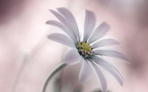 Picture flower, nature, plant, petals, stem