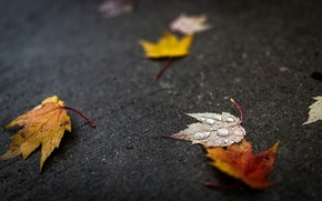 Picture autumn, leaves, water, drops, macro, leaves