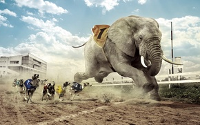 Picture dogs, competition, elephant, Greyhound racing