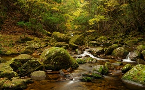 Picture autumn, forest, leaves, trees, stream, stones, moss
