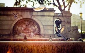 Wallpaper rays, Barcelona, Spain, the city, street, the sun, fountain, pigeons
