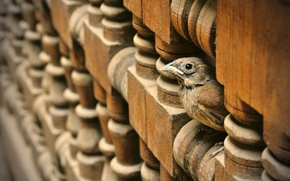 Picture wood, carved wood, small bird