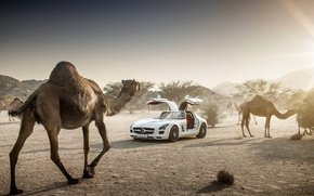 Picture Mercedes-Benz, Sky, AMG, Sun, SLS, White, Supercar, Desert, Camels, Doors
