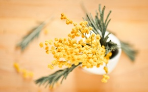 Wallpaper flowers, yellow, blur, vase, buds, Mimosa