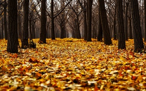 Picture autumn, forest, leaves, trees, Park, yellow