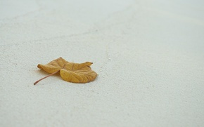 Picture sand, sheet, leaf, photo, photographer, Jamie Frith