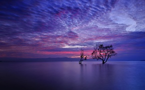 Picture the sky, clouds, mountains, lake, tree, the evening, glow