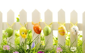 Picture grass, flowers, nature, eggs, spring, Easter
