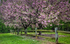 Picture nature, tree, the fence, spring