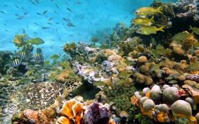 Picture photo, Nature, Fish, Sea, Stones, Corals, Shell, Underwater world