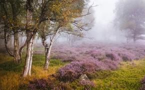 Picture autumn, trees, glade, England, birch, England, Heather, Derbyshire, Derbyshire, Peak District, Stanton Moor, The Peak ...