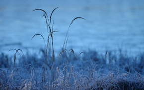 Picture cold, frost, grass, morning, frost, grass