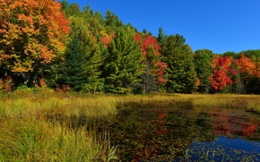 Picture autumn, forest, the sky, grass, trees, pond