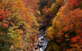 Picture autumn, forest, trees, stream