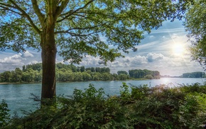 Picture forest, summer, the sun, rays, river, tree, shrub