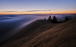 Picture USA, forest, CA, the sky, fog, the evening, morning