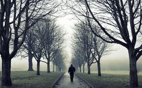 Wallpaper road, autumn, trees, fog, Park, loneliness, mood, branch, one, people, male, walk