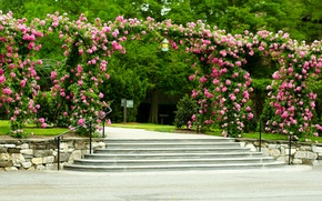 Picture trees, flowers, Park, lawn, roses, ladder, track, steps, canopy, USA, the bushes, Longwood Gardens