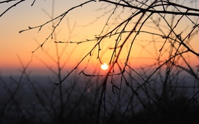 Picture cold, winter, the sky, the sun, trees, branches, Sunset