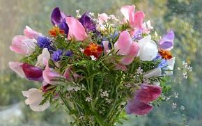 Picture nature, bouquet, plants, petals