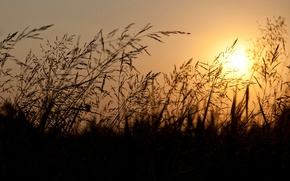Picture the sky, the sun, sunset, Field, the evening, ears, orange