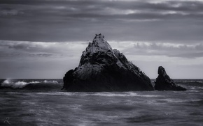 Picture wave, nature, the ocean, rocks, shore, black and white photo