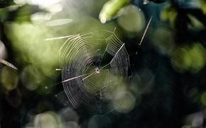 Picture light, glare, spider, Web