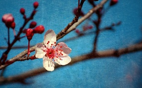 Picture branches, style, background, spring