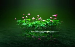 Wallpaper flowers, water, pond, leaves, island