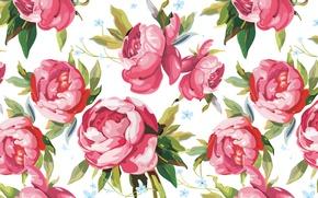 Picture figure, petals, art, buds, peonies