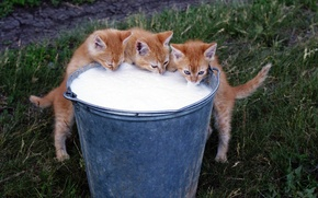 Picture BACKGROUND, GRASS, COLOR, TRIO, FOOD, BUCKET, FOAM, GREEN, RED, MILK, KITTENS, FOAM, MEOW), FRESH, DELICIOUS