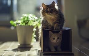 Picture the sun, cats, house, box, plant, kittens, Daisy, Ben Torode, Hannah, Benjamin Torode