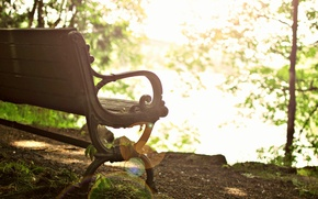 Picture widescreen, bench, leaves, HD wallpapers, Wallpaper, leaves, tree, shop, full screen, the sun, background, fullscreen, …