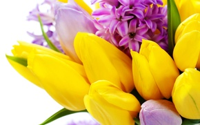 Picture flowers, spring, yellow, tulips, March 8, flowers, tulips, spring, hyacinths