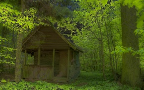 Picture forest, leaves, trees, thickets, house