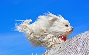 Picture each, the wind, dog