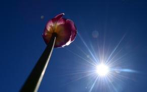 Picture the sky, the sun, Tulip