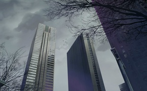 Picture trees, skyscrapers, cloudy sky
